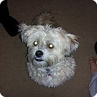 Adopt A Pet :: Ozzy - Strongsville, OH