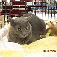 Adopt A Pet :: Kiki - Riverside, RI