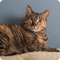 Adopt A Pet :: Etta - St. Louis, MO