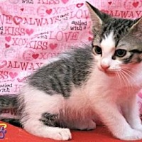 Adopt A Pet :: Ivy - Sebastian, FL