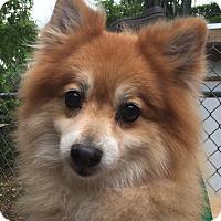 Adopt A Pet :: Hendrix - Orlando, FL