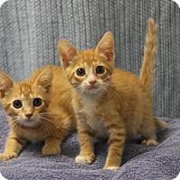 Adopt A Pet :: Larry & Leroy - Seminole, FL