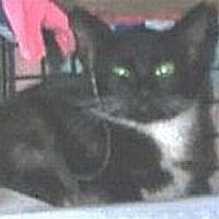 Adopt A Pet :: Cookie - Miami, FL