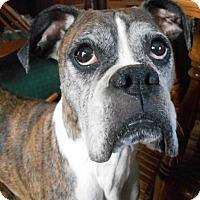 Adopt A Pet :: Miss Wrigley - Sheridan, IL