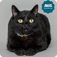 Adopt A Pet :: Angel - Wyandotte, MI