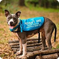 Adopt A Pet :: Arya - Matawan, NJ
