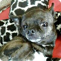 Adopt A Pet :: Sunshine - Spartanburg, SC