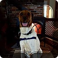 Adopt A Pet :: Rocky n/k/a Rocco - Ridgefield, CT