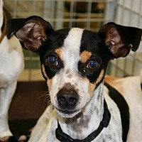 Adopt A Pet :: MICKEY - Willows, CA