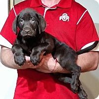 Adopt A Pet :: Hershey - New Philadelphia, OH