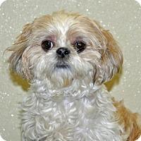 Adopt A Pet :: Olive - Port Washington, NY
