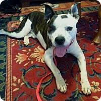 Adopt A Pet :: OMAR - North Augusta, SC