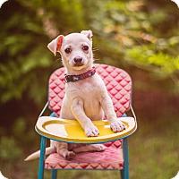 Adopt A Pet :: Wrigley - Austin, TX
