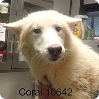 Adopt A Pet :: Coral - Greencastle, NC