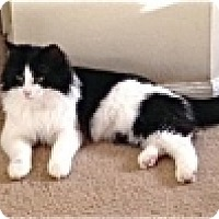 Adopt A Pet :: Lynn - Colorado Springs, CO