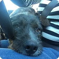 Adopt A Pet :: Keeper - Culver City, CA