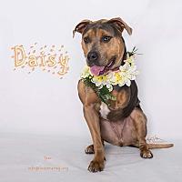 Adopt A Pet :: Daisy - Riverside, CA