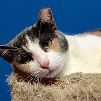 Adopt A Pet :: Marley - Topeka, KS