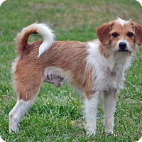 Adopt A Pet :: Luke Duke - Hagerstown, MD