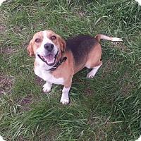Adopt A Pet :: Leonard - Iroquois, IL
