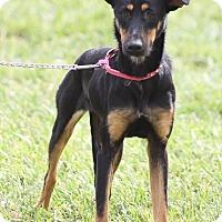 Adopt A Pet :: DAISY - Santa Monica, CA