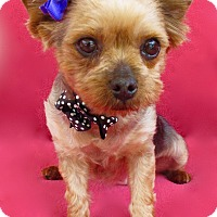 Adopt A Pet :: Poppy - Irvine, CA
