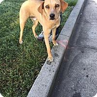 Adopt A Pet :: Rex - Columbia, TN