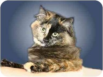 Domestic Mediumhair Cat for adoption in Montgomery, Illinois - Tori