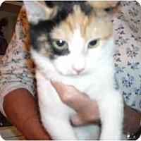 Adopt A Pet :: Analee - Riverside, RI