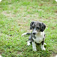 Adopt A Pet :: Winter - Franklin, VA