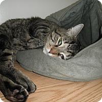 Adopt A Pet :: Truman - Milwaukee, WI