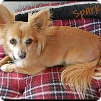 Adopt A Pet :: Sparky - Orange, CA