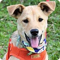 Adopt A Pet :: Dana - San Francisco, CA