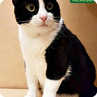 Adopt A Pet :: Lucy - Oakville, ON