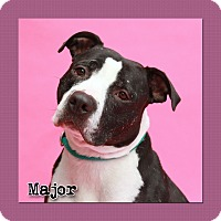 Adopt A Pet :: Major - Aiken, SC