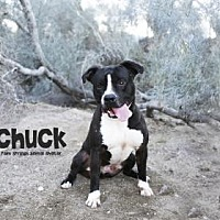 Adopt A Pet :: Chuck/Duke - Palm Springs, CA