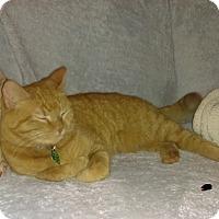 Adopt A Pet :: Hootie - Rochester, MN