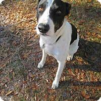 Adopt A Pet :: CLIFF - Panama City, FL