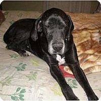 Adopt A Pet :: Princess - Oak Ridge, TN