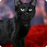 Adopt A Pet :: Aciano - Eagan, MN