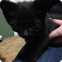 Adopt A Pet :: Melt - Hamilton, ON