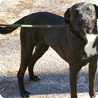 Terrier (Unknown Type, Medium) Mix Dog for adoption in Livingston, Texas - Phoenix