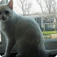Adopt A Pet :: TC - Fairborn, OH