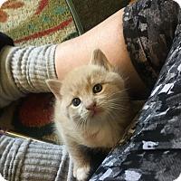 Adopt A Pet :: Buster Brown - Southington, CT