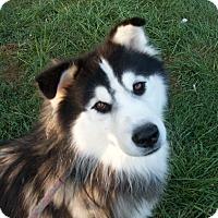 Adopt A Pet :: Jonas - 18 months - Augusta County, VA