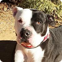 Adopt A Pet :: Pretty Boy Floyd - Albuquerque, NM
