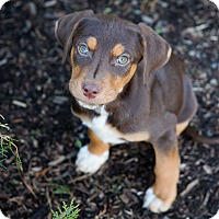 Adopt A Pet :: Zander - Waldorf, MD
