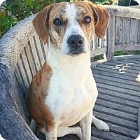 Adopt A Pet :: Bailey - Fredericksburg, TX