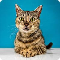 Adopt A Pet :: Winnie - Chandler, AZ