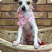 Adopt A Pet :: Effi - Benbrook, TX
